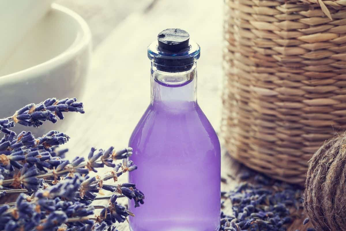 Lavender Essential Oil for Stress and Anxiety